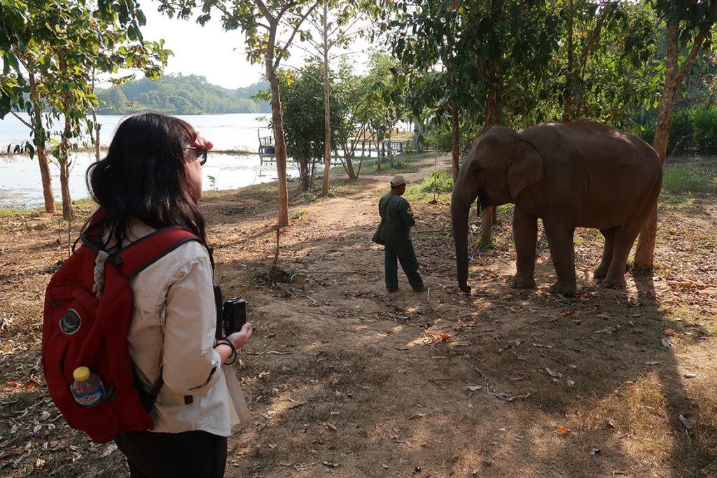 Watching elephants