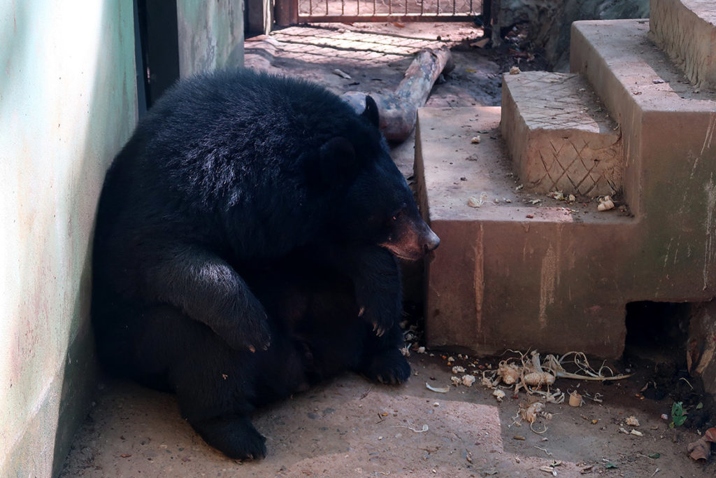 Bear Rescue Centre